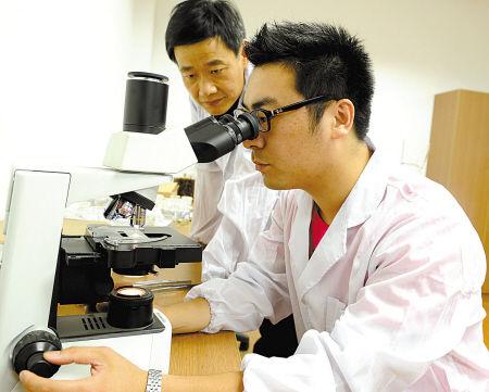 图为工作人员正在用仪器观察翘鼻象白蚁特征。