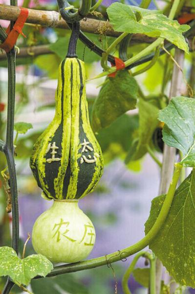 植物果实的结构组成示意图