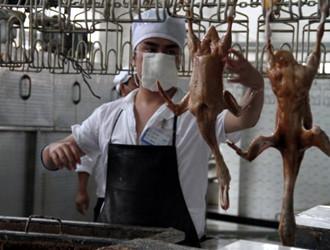 活禽交易,永久关闭,宁波主城区,家禽集中屠宰点