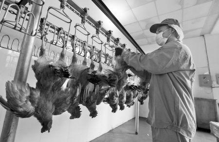 宁波活禽市场杀白禽流水线昨天下午验收。记者 许天长 摄