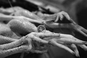 """7月1日,白沙菜市场,正在销售的""""杀白鸡""""佩戴着脚环"""