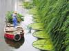 生物浮岛美化河道