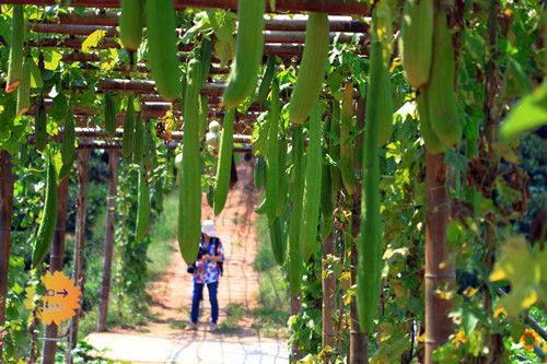 尚书圩村农场