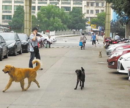 小区道路上狗乱窜。