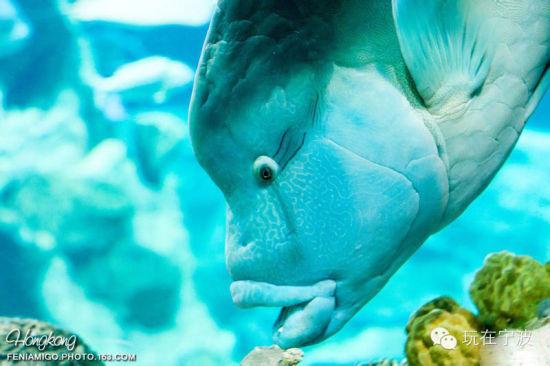 壁纸 动物 海底 海底世界 海洋馆 水族馆 鱼 鱼类 550_366
