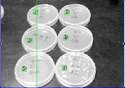 工作人员提取了表层({5}覆膜,{6}未覆膜)、里层({3}覆膜,{4}未覆膜)、深层({1}覆膜,{2}未覆膜)六组样本,由此可见未覆膜隔夜西瓜表层细菌数量最多,达到每升40万只。