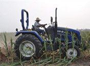 河南重旱区农民含泪铲除绝收玉米