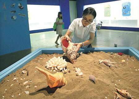 昨天,宁波博物馆工作人员在布置贝壳展。
