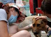 志愿者拦车救狗狗贩收万元运费