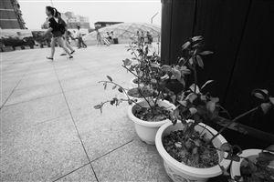 火车站广场上,不少小盆栽已经枯萎