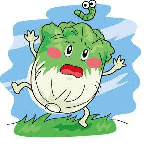 萝卜白菜图片卡通图片