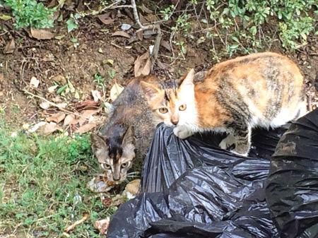 湖景花园小区里翻垃圾觅食的流浪猫。(王伊婧 摄)