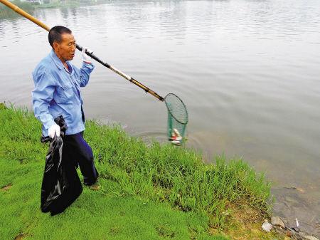 """黄师傅正在湖边捞死鱼。 网友""""常乐老兵""""摄"""