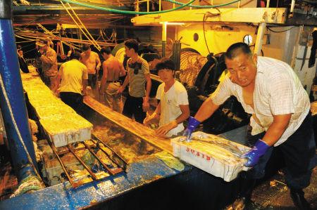 石浦渔港路一码头上,各类海鲜被船员们装上拖拉机发往当地的水产加工企业。 通讯员 陈吉明 摄