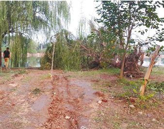 绿化带上的车轮痕迹清晰可辨,一棵直径40厘米的柳树被撞得连根拔起,打捞起来的跑车车头严重变形。