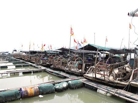 图为停泊在奉化栖凤码头的排筏。(王量迪 摄)