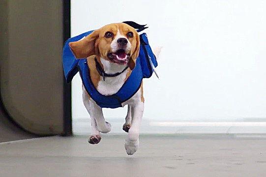 荷兰航空别出心裁萌犬帮助乘客找回失物