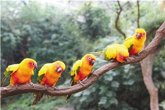 国庆期间雅戈尔动物园有全球名鸟大聚会(图)