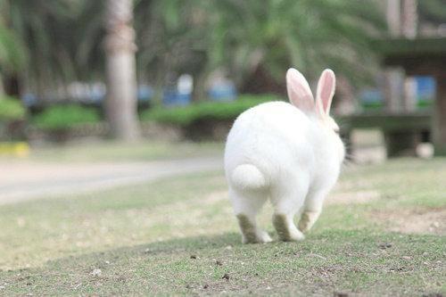 揭秘地球上被小动物们占领的角落