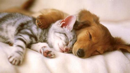 动物睡觉图片大全