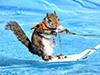 与动物一起冲浪