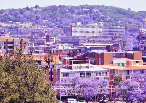 南非紫色风情